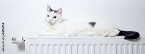 Katze liegt auf der heizung Fototapet