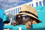 Pies relaksujący się na leżaku