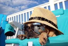 Pug Relaxing In Beach Chair