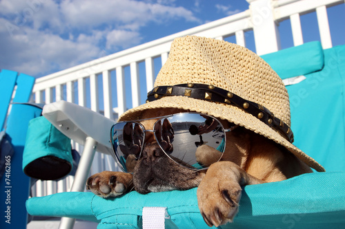 Papel de parede  Pug Relaxing in Beach Chair