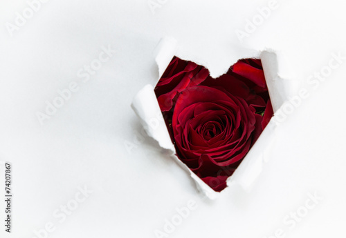 Fototapety, obrazy: paper heart and red roses
