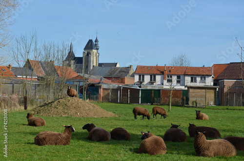 Photo  Herd fo sheep resting on the grass