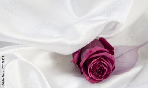 rozowy-kwiat-na-bialym-tle-satyny-tkaniny