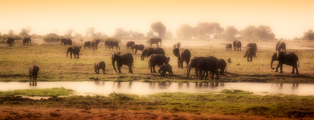 Fototapeta na wymiar Herd of elephants in African delta