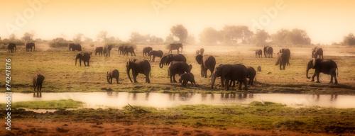 Herd of elephants in African delta