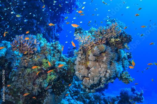Foto op Canvas Koraalriffen coral reef