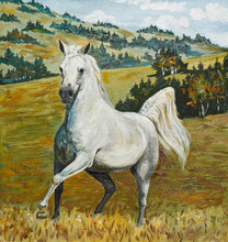 Oil Painting - White Horse Gal...