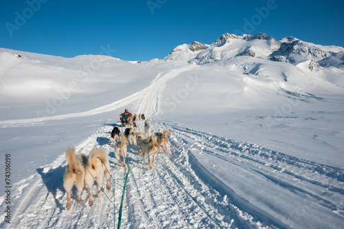 Fotobehang Poolcirkel Dog sledding tour in Tasiilaq, Greenland