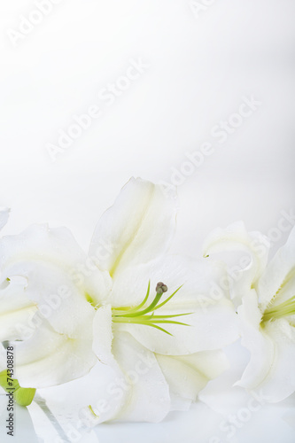 Poster de jardin Nénuphars Beautiful lily isolated on white