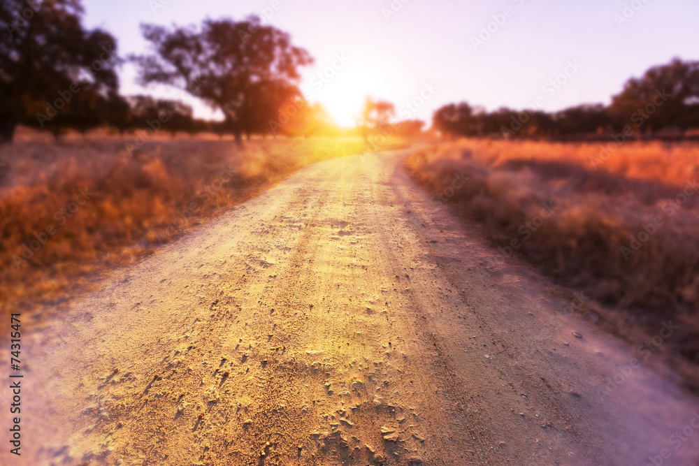 Fototapety, obrazy: Road in field