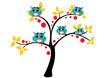 drzewo,sowy,ptaki