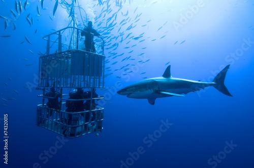 mata magnetyczna Weisser Hai vor Käfig