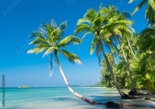Deurstickers Strand Palm Panorama Relaxation In Peace