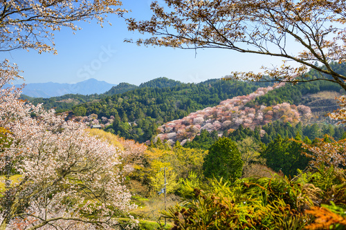 Fotobehang Tokyo Spring Landscape in Nara, Japan