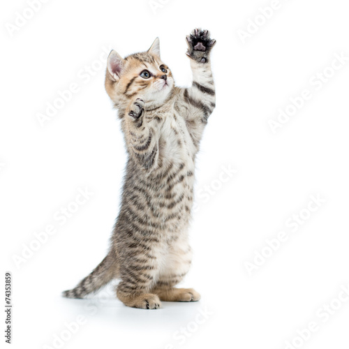 Photo playful funny kitten looking up. isolated on white background
