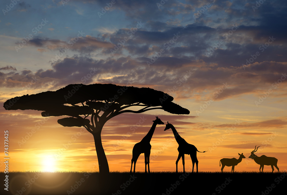 Fototapety, obrazy: Giraffes with Kudu at sunset