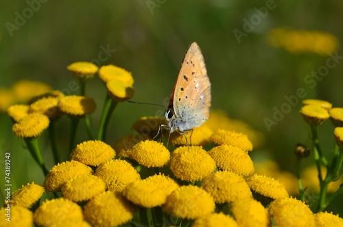 Fototapety, obrazy: Motyl