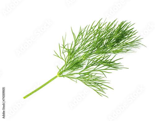 Fotografia Green dill isolated on white background. Studio macro
