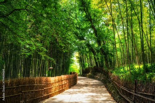 Spoed Foto op Canvas Bamboo A small road through the bamboo forest.