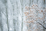 snowfall