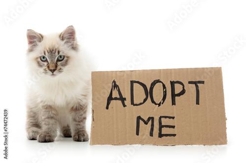 Photo Kitty asking for adoption