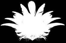 Bird Feather Fan Silhouette On...