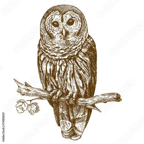 Canvas Prints Owls cartoon Engraving antique illustration of owl