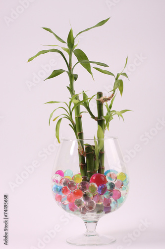 Photo Beautiful flowers in vases with hydrogel