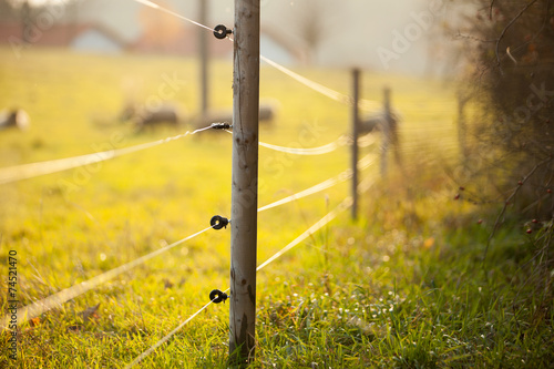 Electric fencing around a pasture with farm animals #74521470