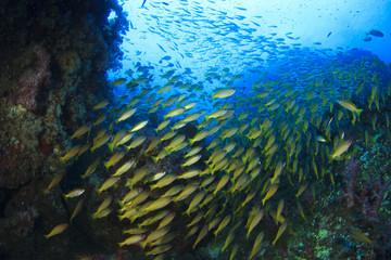 Fototapeta na wymiar Fish school underwater