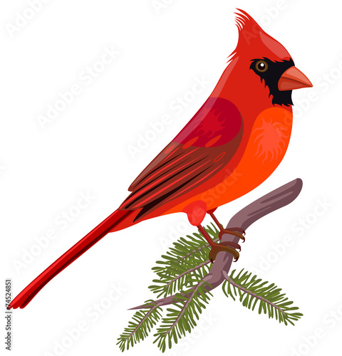 Vector illustration of Cardinal Wallpaper Mural