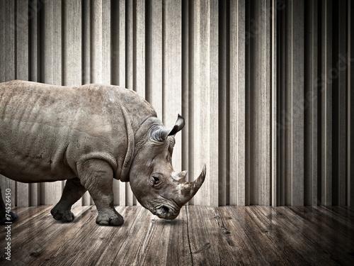 Poster Rhino rhino in the house