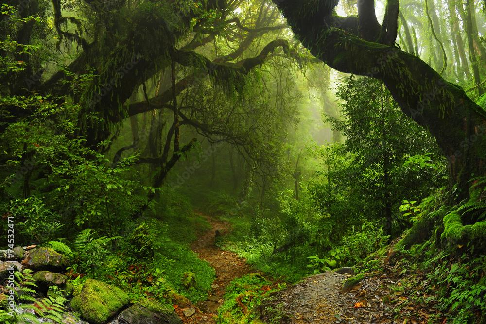 Fototapeta Selva Nepal