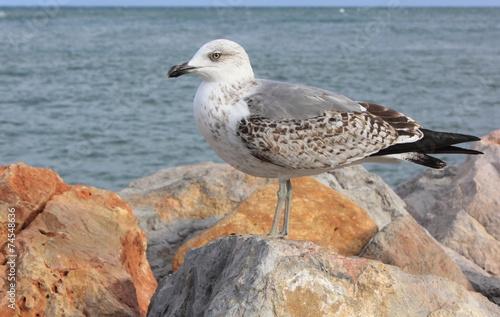 Fotografie, Obraz  Bel oiseau