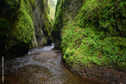Fotografie, Tablou green canyon