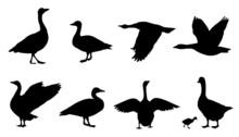 Goose Silhouettes