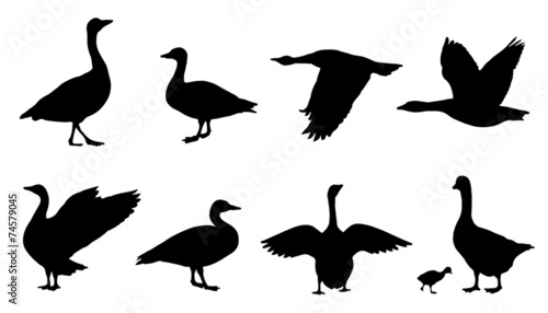Fotomural goose silhouettes