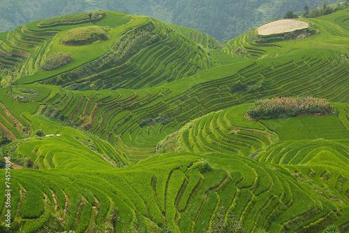 Garden Poster Rice fields Longji rice fields, Dragon Hill. Ping'an, China