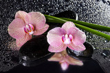 Fototapeta Orchid - Orchids and black stones with reflection