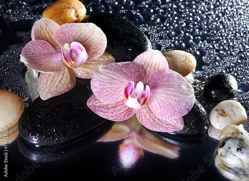 kwiaty-orchid-i-kamienie-z-refleksji