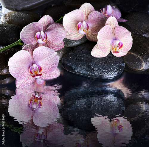 mokre-kamyki-spa-i-rozowe-orchidee