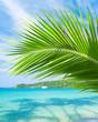 Coconut Coast Serenity Shore