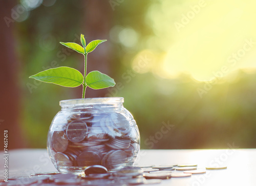 Fotografie, Obraz  Sprout rostoucí na peněžním hromadu sklenic banky