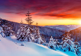 Fototapeta Sunset - Amazing winter landscape