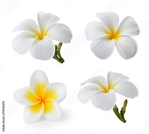 Spoed Foto op Canvas Frangipani Tropical flowers frangipani (plumeria) isolated on white backgro