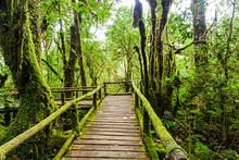 Beautiful Rain Forest At Angka Nature, Thailand