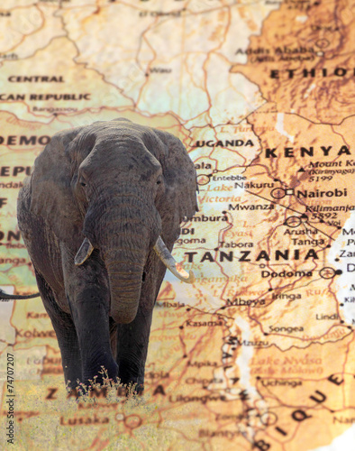 Foto op Canvas Elephant overlying a vintage map of Tanzania