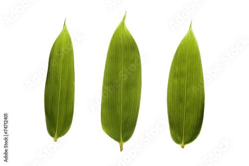 Láminas  笹の葉