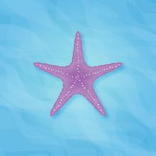 Purple Starfish In Sea