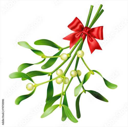 Fotografie, Obraz  Mistletoe on white. Vector